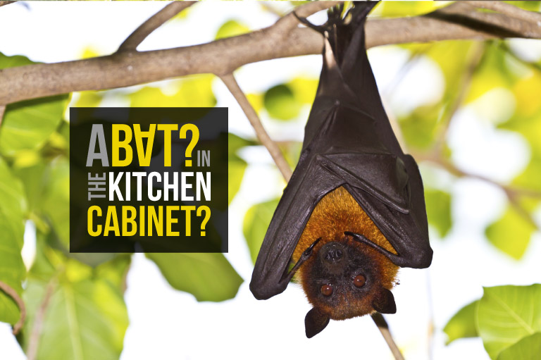 A bat in the kitchen cabinet?
